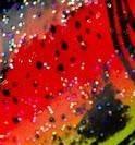 RCR - Red Crawfish